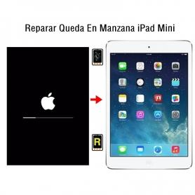 Reparar Queda En Manzana iPad Mini